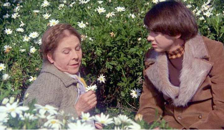 harold and maude a lesson of life and love Along a few days, maude gives a lesson of life to harold, changing his behavior and feelings forever harold and maude is a paean to life and love.