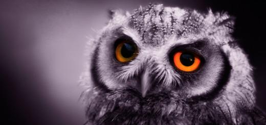 TN615_NIGHT_OWL_720X340_F